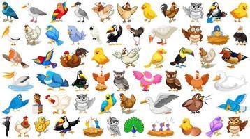 Satz verschiedene Vogelkarikaturart lokalisiert auf weißem Hintergrund vektor