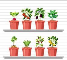 uppsättning olika grönsaker i olika kruka på vit vägghylla