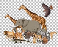 Gruppe wilder afrikanischer Tiere auf transparentem Hintergrund
