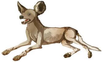 afrikanischer wilder Hund in der Legeposition auf weißem Hintergrund vektor