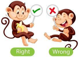 motsatta ord med rätt och fel vektor