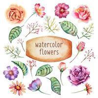 akvarell blommor samling