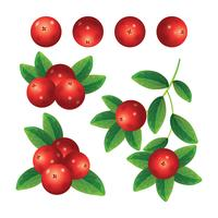 Cranberries Sammlungssatz