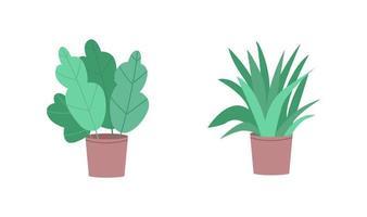 tropiska krukväxter platt färg vektor objekt set