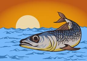 Sardin fisk bakgrund vektor