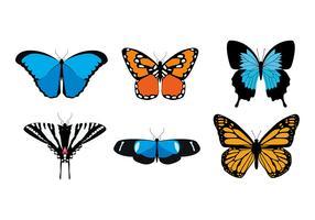 Verschiedene Arten des Schmetterlinges geben Vektor frei