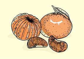 Clementine Hand gezeichneter Vektor