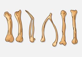 Hühnerflügel Knochen vektor