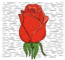 Vektor-Hand gezeichnete Blumen-Illustration