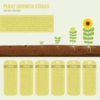 växttillväxtstadier infograph vektor