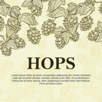 Hop Plant Bakgrund vektor