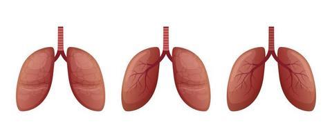Lungenvektorentwurfsillustration lokalisiert auf weißem Hintergrund