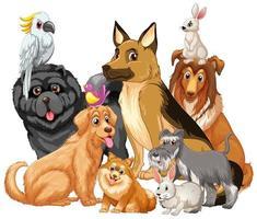 grupp husdjur på vit bakgrund