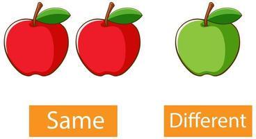 motsatta adjektiv ord med samma och olika vektor