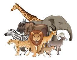 Gruppe von wilden afrikanischen Tieren auf weißem Hintergrund