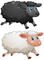 schwarze Schafe und weiße Schafe auf weißem Hintergrund