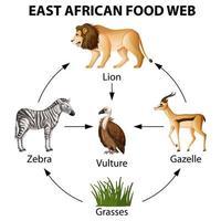 Infografik des ostafrikanischen Nahrungsnetzes vektor