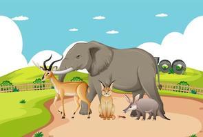 Gruppe von wilden afrikanischen Tieren in der Zooszene
