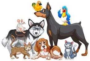 Gruppe von Haustieren auf weißem Hintergrund vektor