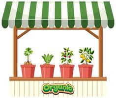 växtbutik med randig markis på vit bakgrund vektor