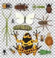 uppsättning olika insekter vektor