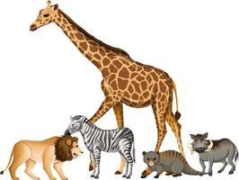 grupp av vilda afrikanska djur på vit bakgrund vektor