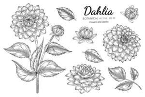 uppsättning dahlia blommor och blad konturteckningar vektor