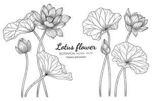 handritad lotusblomma och blad vektor