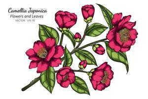 handritad rosa camellia japonica blomma vektor