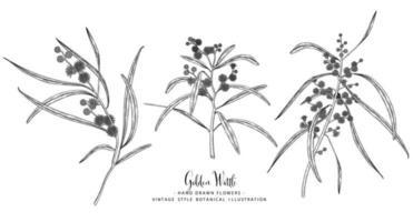 Golden Wattle eller Acacia Pycnantha handritade element vektor