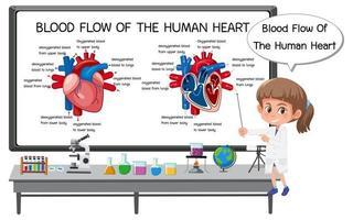 blodflöde av mänskligt hjärta diagram vektor