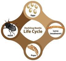 Diagramm, das den Lebenszyklus eines dunklen Käfers zeigt