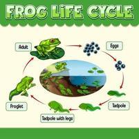 diagram som visar grodans livscykel vektor