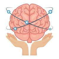 Hände heben menschliches Gehirn mit Pluszeichen