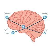 mänsklig hjärna med plussymboler