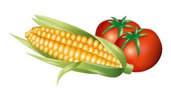 Tomaten- und Maisgemüsevektorentwurf vektor