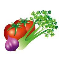 Sellerie Knoblauch und Tomatengemüse Vektor Design