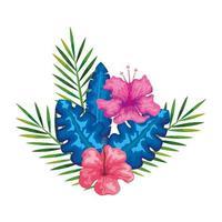 Hibiskusblüten rosa Farbe mit Zweigen und Blättern, tropische Natur, Frühling Sommer botanisch vektor