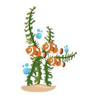 havsvattensliv, anemon fiskar med tång, clownfiskar på vit bakgrund