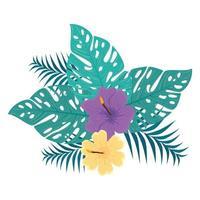 Dekoration von Hibiskus gelb und lila Farbe, mit tropischen Blättern, Frühling Sommer botanisch vektor