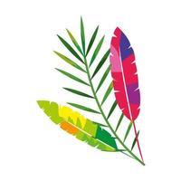 exotiska fjädrar med tropiska blad isolerad ikon vektor