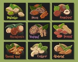 Vektor bunte Illustrationen auf dem Ernährungsthemasatz von verschiedenen Arten von Nüssen. Aufkleber für Ihr Design.