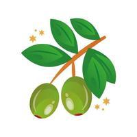Zweig mit Olivensamen und Blättern vektor
