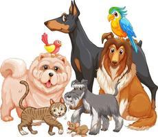 grupp husdjur på vit bakgrund vektor
