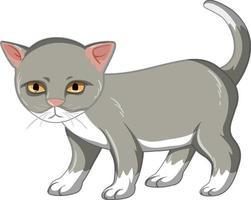graues Kätzchen, das allein auf weißem Hintergrund steht