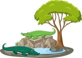 isolierte Szene mit Krokodil um den Teich vektor