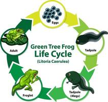 diagram som visar grodans livscykel