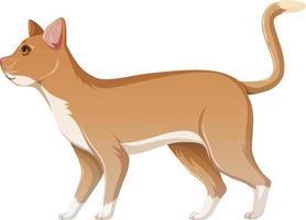 niedliche Katze isolierte Zeichentrickfigur vektor