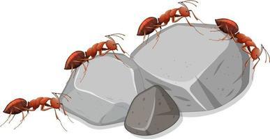 viele Ameisen auf Steinen auf weißem Hintergrund vektor