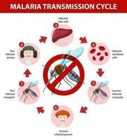 Infografik Informationen zum Malaria-Übertragungszyklus vektor